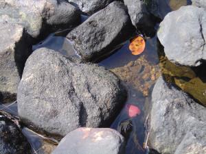 walker pond 2014 007