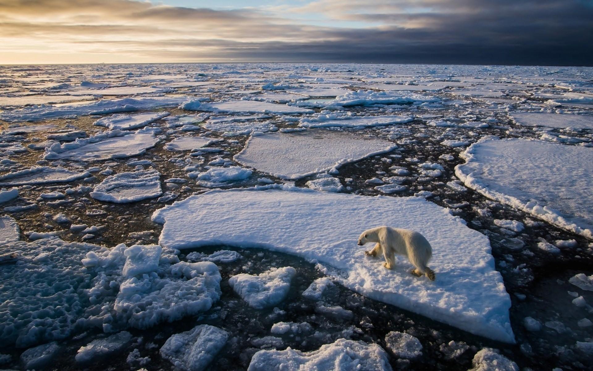 Льдины на берегу бесплатно