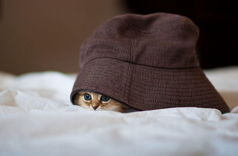 kitty-005