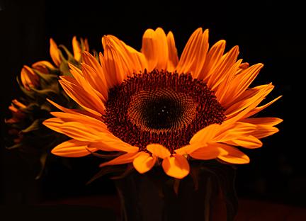 Aug Sunflower web_edited-1