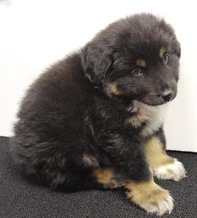 dog_pup for Dori  3 web 2