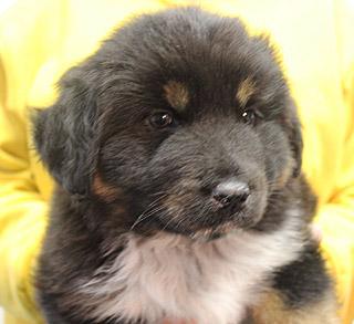Dog_pup  Dori_ web 4