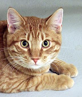 cat-Allen_web