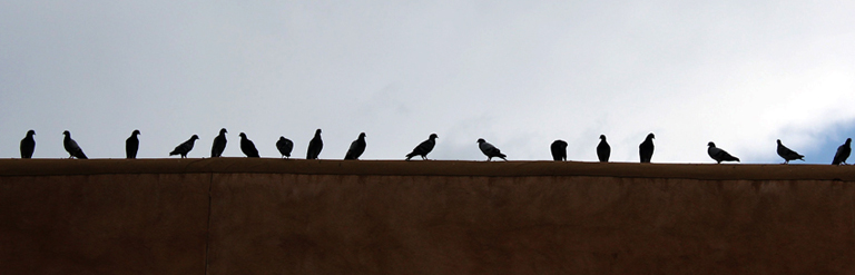 NM Birds on roof_edited-1