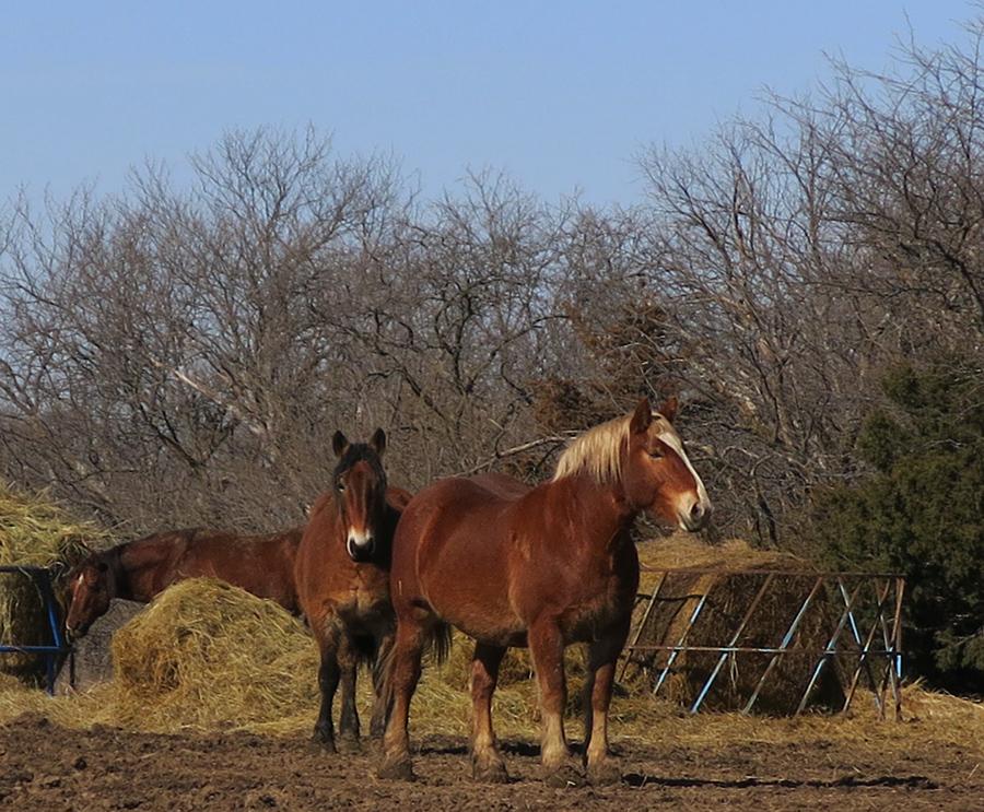 February horses_edited-1