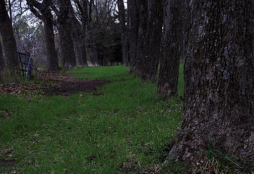 Shady woods_for web photoshoped_edited-1