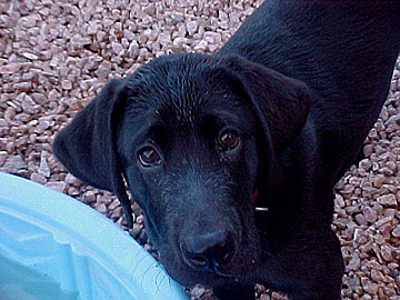 Bodie pup 2 for web