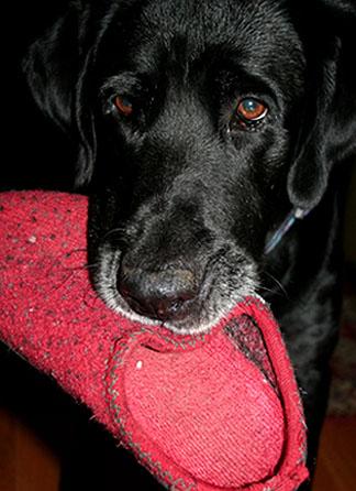 Bodie brings slippers