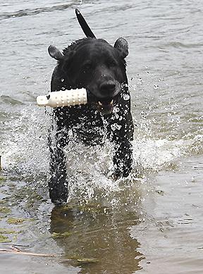Bodie good splashes