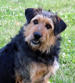 dog_Abby_web 3