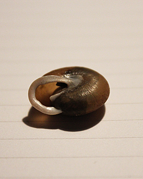 snailshell 2_for web