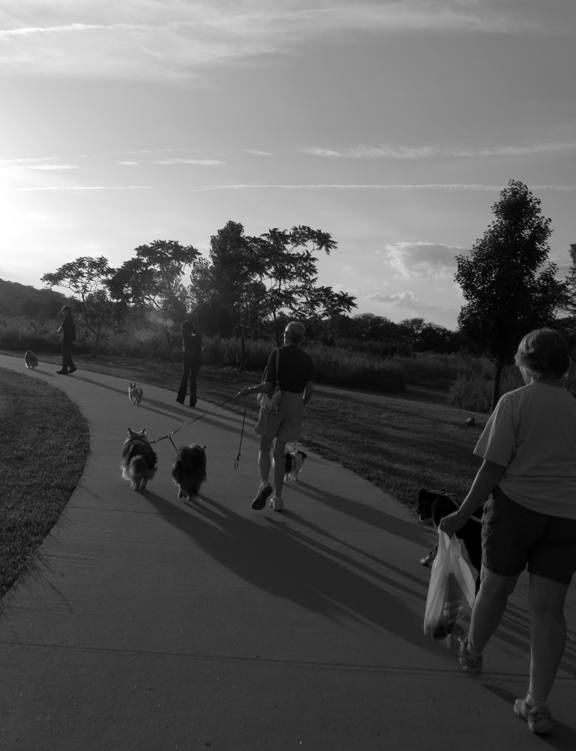 Walking dog into sunst,