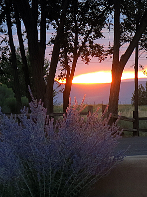 taos Sunset and lavender_web