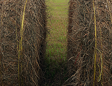 two Bales  for web