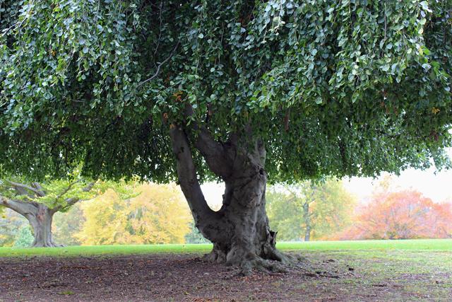 Crown Hill tree web_edited-1