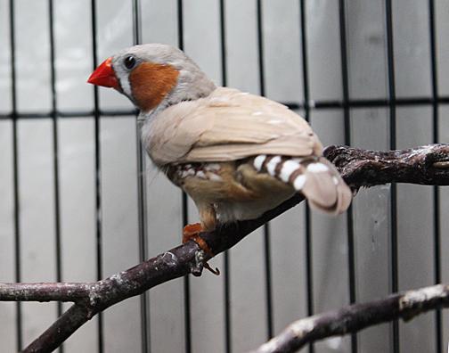 Bitsey's bird