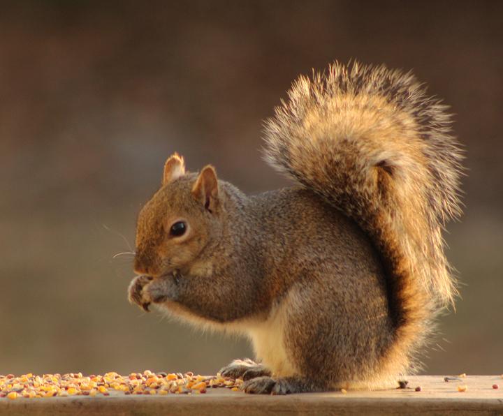 Jan 8 squirrel 2_edited for web-1