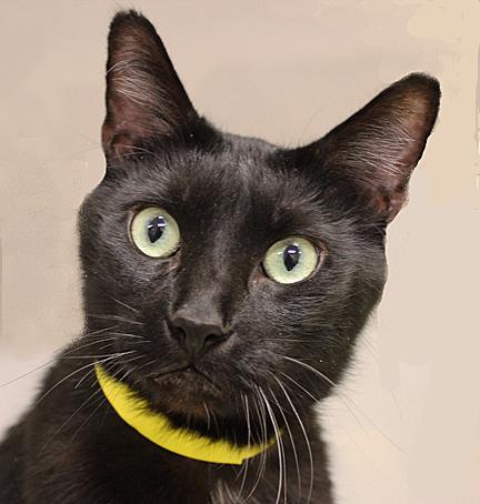 cat_Black w-yellow _webcopy-1_edited-1