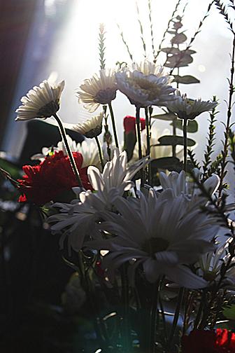feb 5 flowers