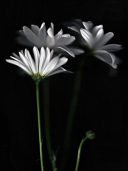 Feb 10 flower scan web_edited-2good