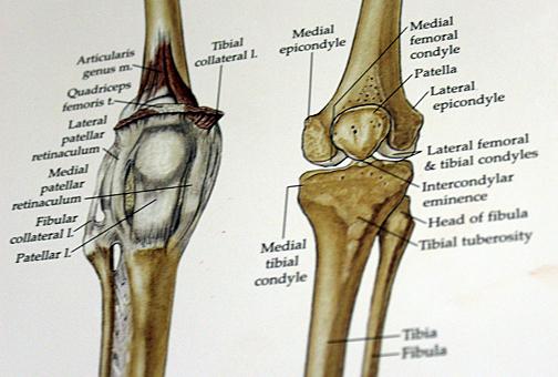 Feb 11 Knee chart