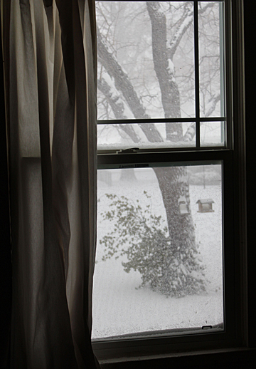Feb 21 Snowy day