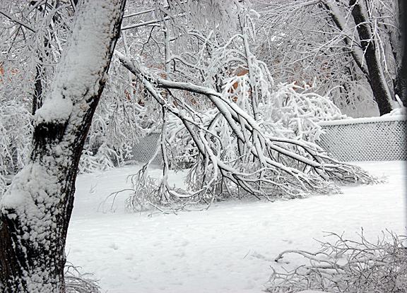Feb 26  down tree