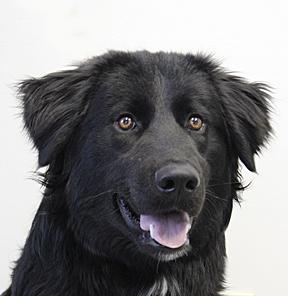 dog_lawson_web 2