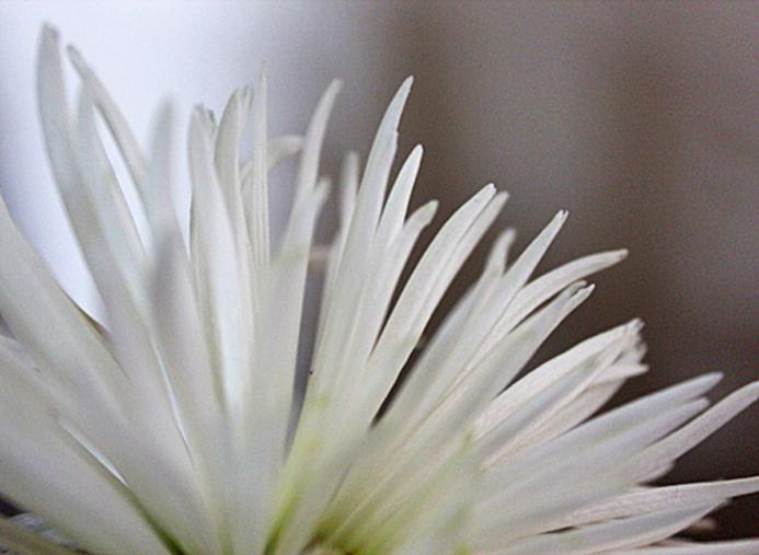 mar 3 flower 2 web