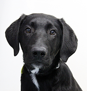 dog_Connor_web_edited