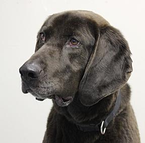 dog_Deacon_web 4
