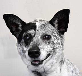 dog_noname_web 1