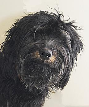 dog_vegas_web 3