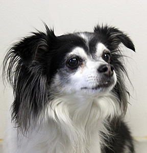 dog_Stitch_web 2