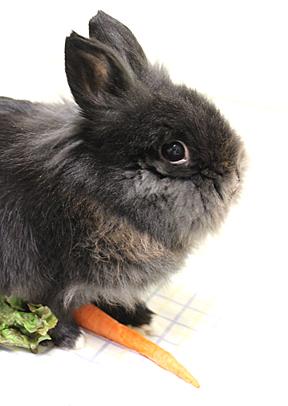 Bunny_gus_ web 3