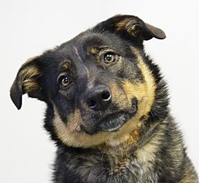 dog_Trista_web 5