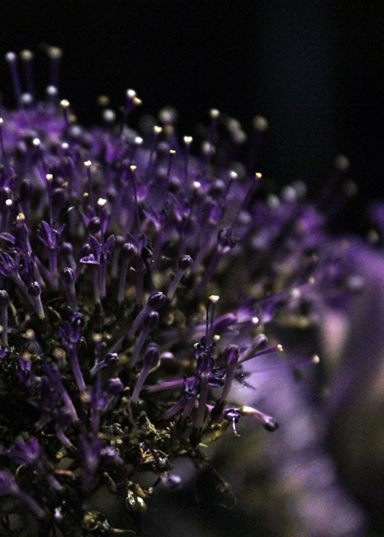 Purple flowers web_edited-3
