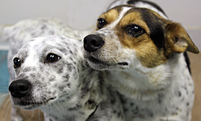 dogs_Angel and Spice_together for web
