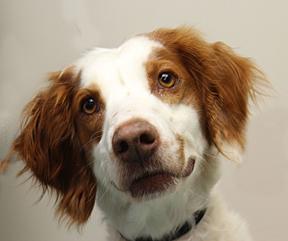 dog_Sasha_web 3_