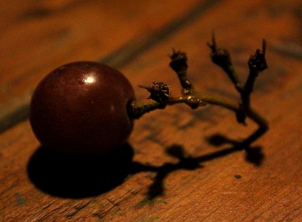 Last grape_edited-1