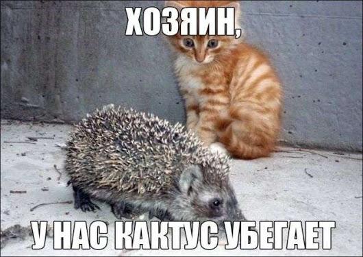 1518476913_drunkcow.net_podborka_kartinki_17