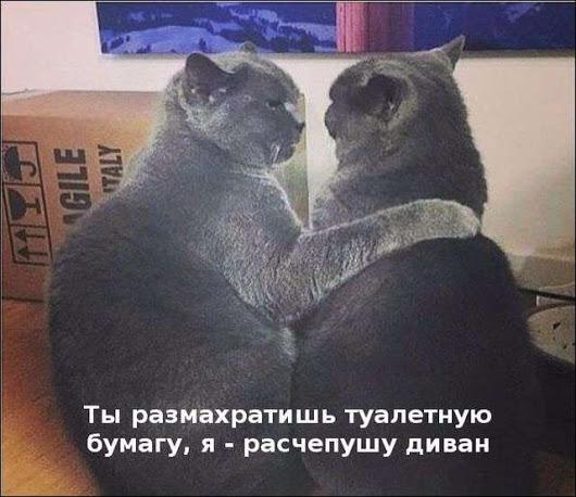 1518476914_drunkcow.net_podborka_kartinki_02