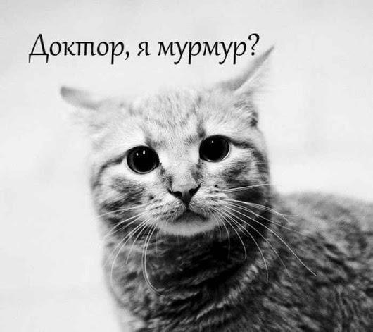 1518545900_drunkcow.net_prikolnye-kartinki-2