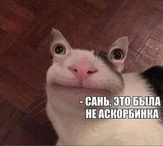 46012275_343823346195620_6934720729459982336_n
