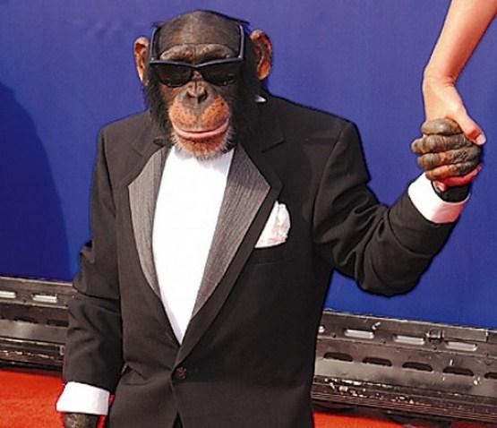 crazy_monkeys_01