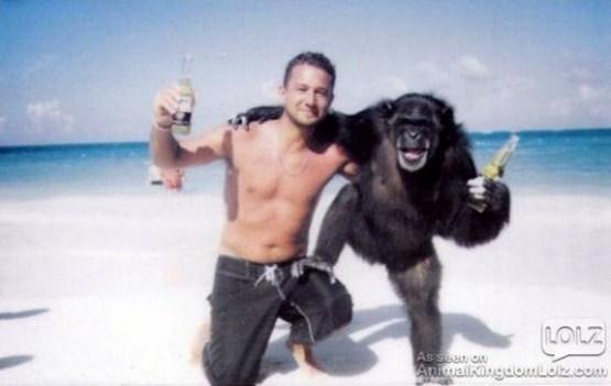 crazy_monkeys_02