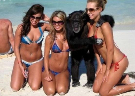 crazy_monkeys_07