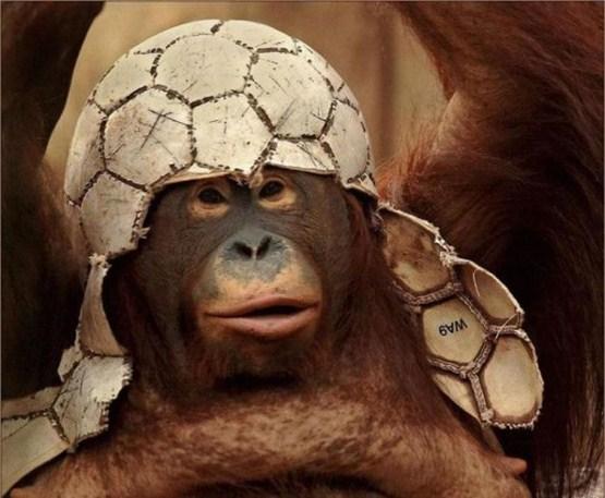 crazy_monkeys_08