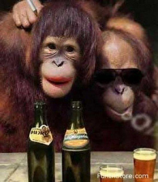 crazy_monkeys_11