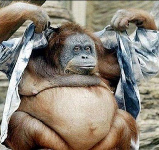 crazy_monkeys_12